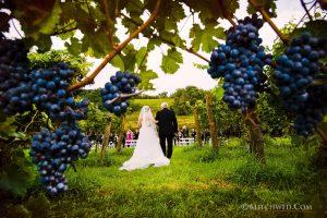 Walking Up The Aisle Millbrook Vineyard Wedding – Hudson Valley Wedding Photographer